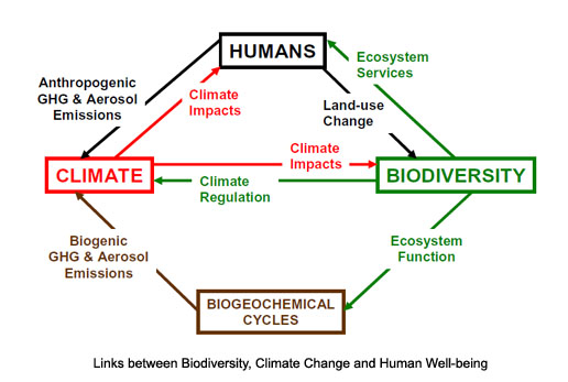 relationship between human activities and climate change