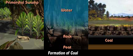 Coal Formation