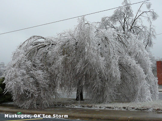 frozen tree Muskogee ice storm