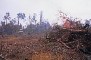 Indonesian deforestation
