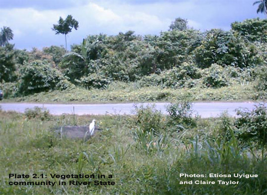 Niger vegetation
