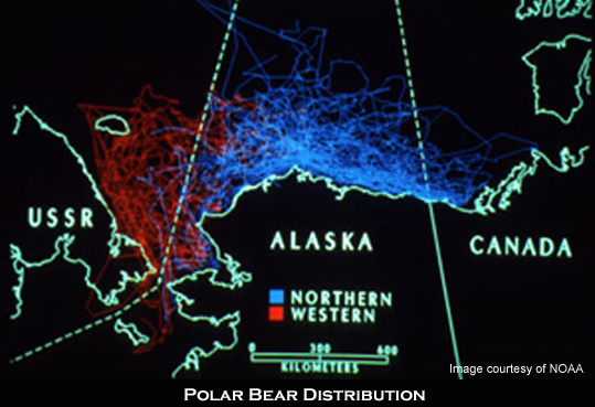 Polar bear distribution