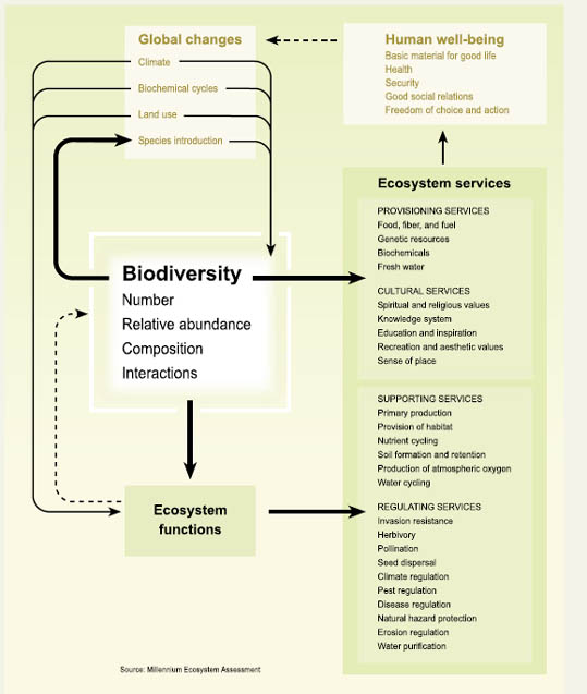 Biodiversity human well being