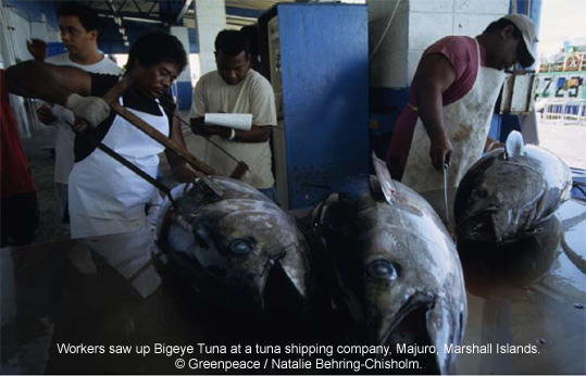 Bigeye Tuna cutting up
